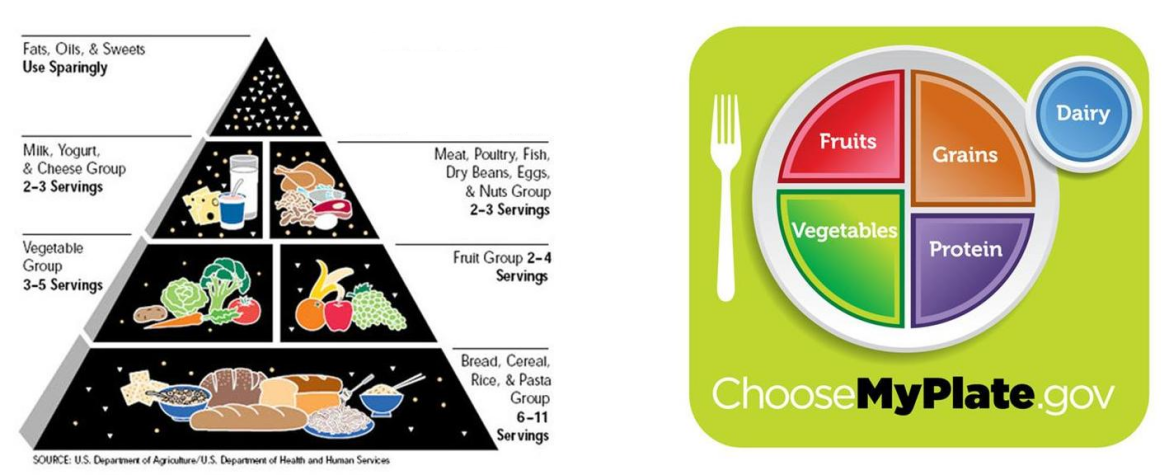 the food pyramid becomes a food plate